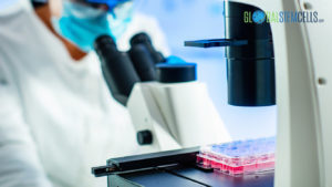 FDA allows Stem Cells production - Global Stem Cells