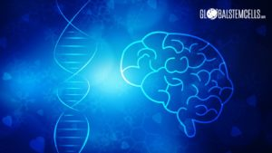 Stem cells can heal the symptoms of traumatic brain injuries - Global Stem Cells